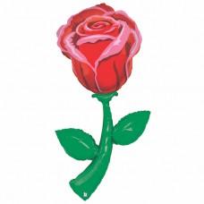 Roze, (152 cm)