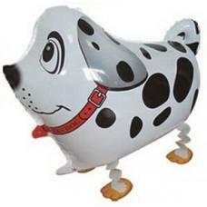 Dalmācijas suns, Balts, Staigaiošs, (61 cm)