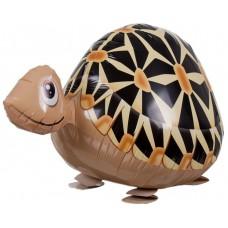 Bruņurupucis, Staigāiošs, (61 cm)