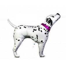 Dalmācijas suns, Rozā, (89 cm)