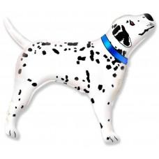 Dalmācijas suns, Zils, (89 cm)